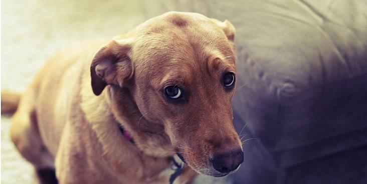 20 Cachorros que se arrependeram de suas decisões