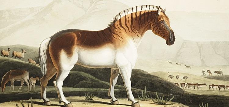 Quaggas (extinto em 1883)