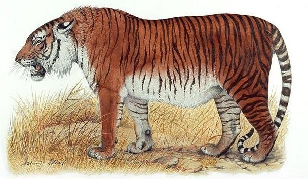 Tigre do Cáspio ou Tigre Persa (extinto em 1970)