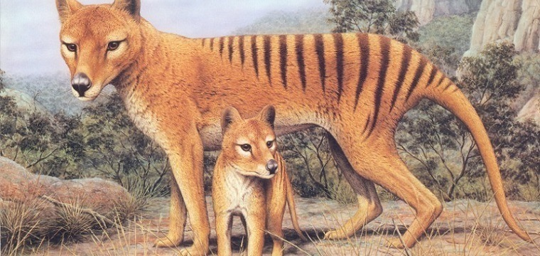 Tigre da tasmânia (extinto em 1936)