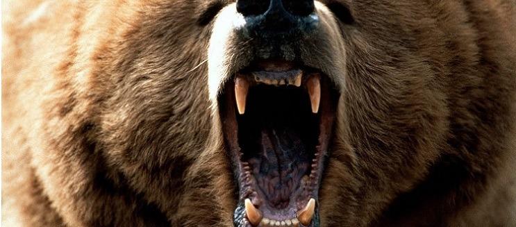 ursos-pardos-animais-perigosos