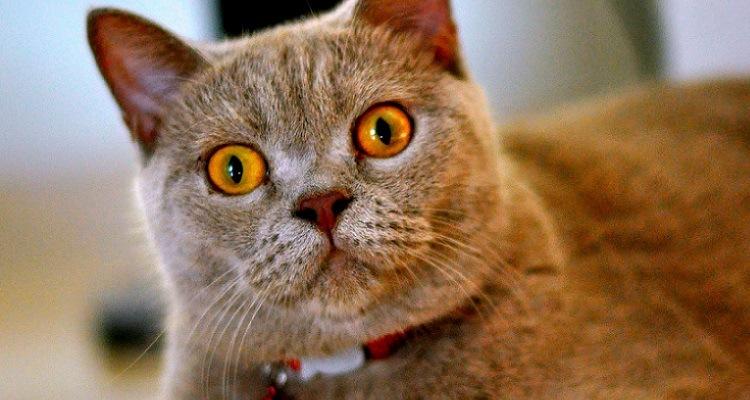 gato-estranho