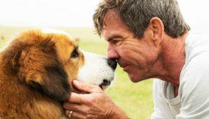 Cartaz do filme Quatro Vidas de Um Cachorro - O Filme